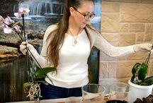 orchidea ültetése
