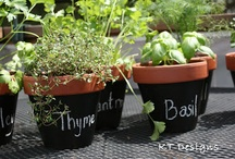 Thrifty with Herbs / Thrifty Herb Tips