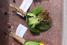Boutonnière, Corsages and Hair flowers