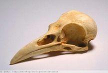 Skull References