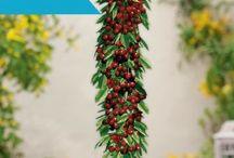 Rośliny do kupienia - Florexpol