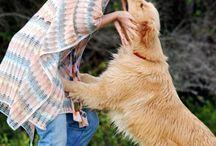 V.I.P / Verry Important Pets