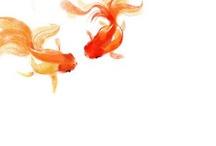 goldfish / by Rene' Jackson