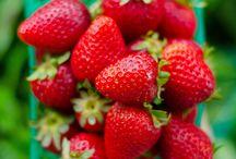 Fruit/Obst