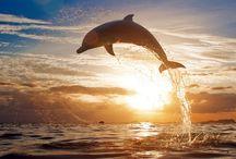 дельфины рыбки