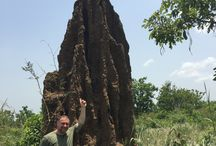 Voyage au Togo /  During my trip to Togo, I saw unusual landscapes and incredible animals. Lors de mon voyage au Togo, j'ai voir des paysages insolites et des animaux  incroyables. Stéphane Rosselle.