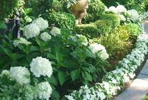 flowers white and green