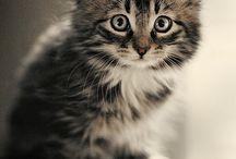 Passion Chats / Ma passion pour les chats