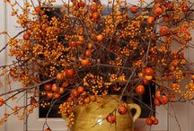 Fall decor / by Tammy Willhard