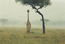 animals / by Ashlee Hanley