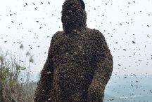 Man wearing bees suit .