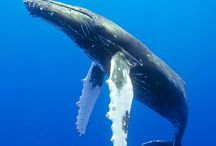 WHALES / by AIMILIA Dr