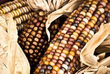 Colors of Indian Corn / by Sharon Dennison