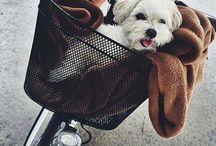 Cachorros ♥♥
