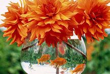 Centerpieces / Tablescapes / by Cathy Pedego