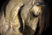 Equine / by Joanna Butler