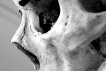 lebka člověka