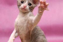 Kissi