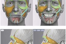 Anatomy for sculpting