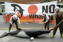 End Whaling / by Dog Angels Onlus