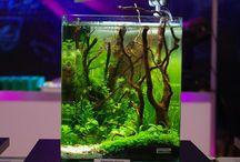 Akvarium och fiskar
