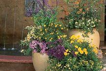 FLORA~Container Gardens / by Ginny Christensen
