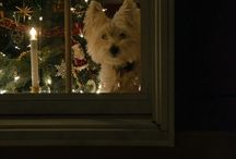 D : Christmas dogs.
