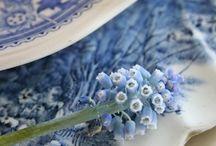 Blue / Blå