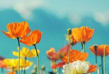 Flowers / by Véronique Hoogesteger