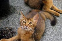 Fabulous Felines / Cats