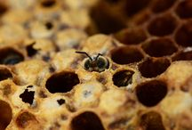 ABEILLES ✿ Les Abeilles et la nature / Retrouvez la petite #abeille dans son environnement #naturel