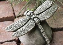 vážka na kameni