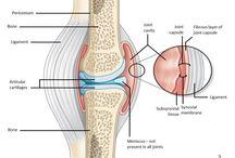 Anatomia: Osteo - Artro - Mio / #vetmed #medvet #joints #bones #muscles #anatomy