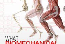 Biomechanics Information
