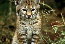 Kitty cats  - I love 'em all / by Sandi Renteria