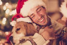 Kutyák és karácsony