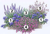 Balkon Pflanzen/Gemüse/Obst