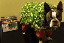Howl-o-ween Costumes for Fido / Our favorite costumes ideas for Fido to trick-or-treat!