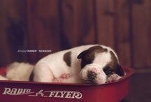 new born pet