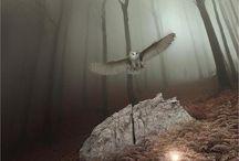 "Falkenna / ""The flight of a bird into an unknown region"""