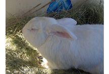 bunny  hutch ideas