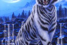 Animais lindos / animals