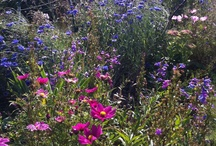 cottage garden / Things that give me pleasure in my Slad Valley garden.