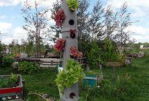 Pflanzen und Beete