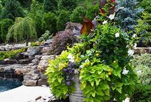 Pots & Container Plantings