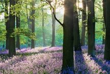 Seasons: Spring / Photo gallery dedicated to Spring.