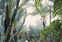 Marrocan Gardens