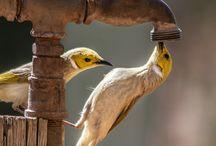 άγρια πουλια