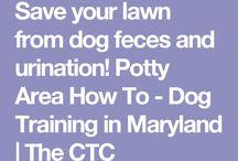 Animal training
