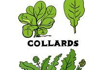 Vegetables & Herbs / PKN Herbs & Vegetables